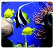 Egéralátét újrahasznosított Fellowes Earth Series tengeri halak